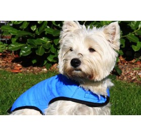 Cool Coat for Dogs