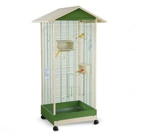 Cage birds LOBELIA TRIXIE