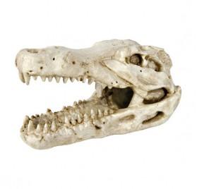 Crocodile Skull TRIXIE